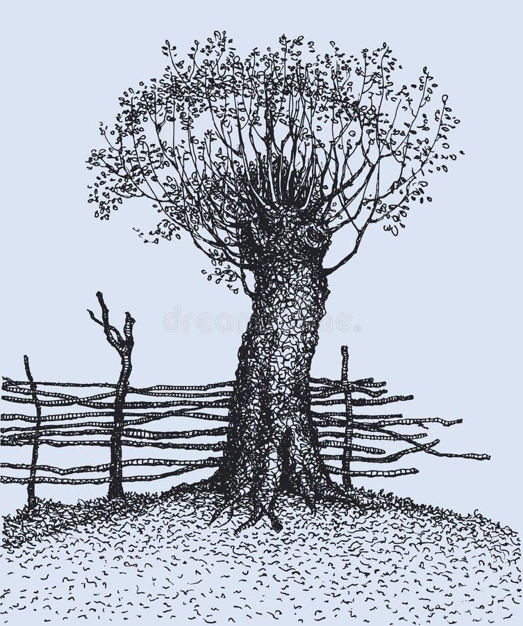 Oude boom dichtbij de omheining royalty-vrije illustratie