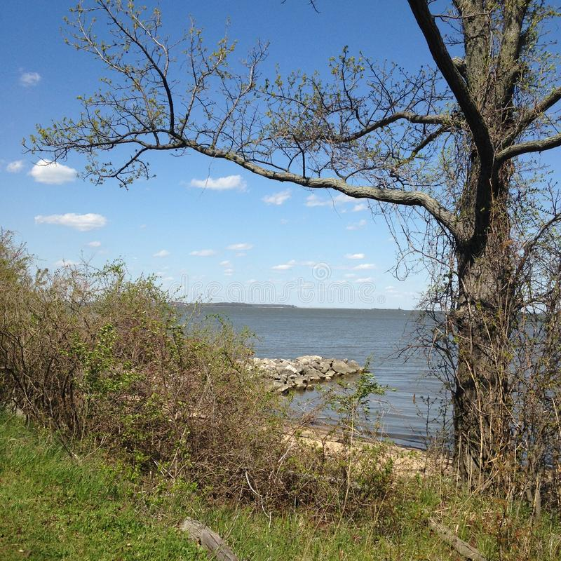 Oude boom door Patapsco stock afbeelding