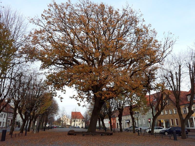 Oude boom en los blad stock fotografie