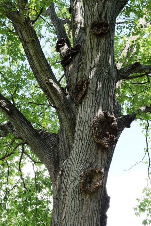 Oude boom in het park stock afbeeldingen