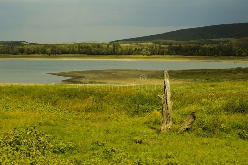 Oude boom op de achtergrond van het reservoir stock foto's