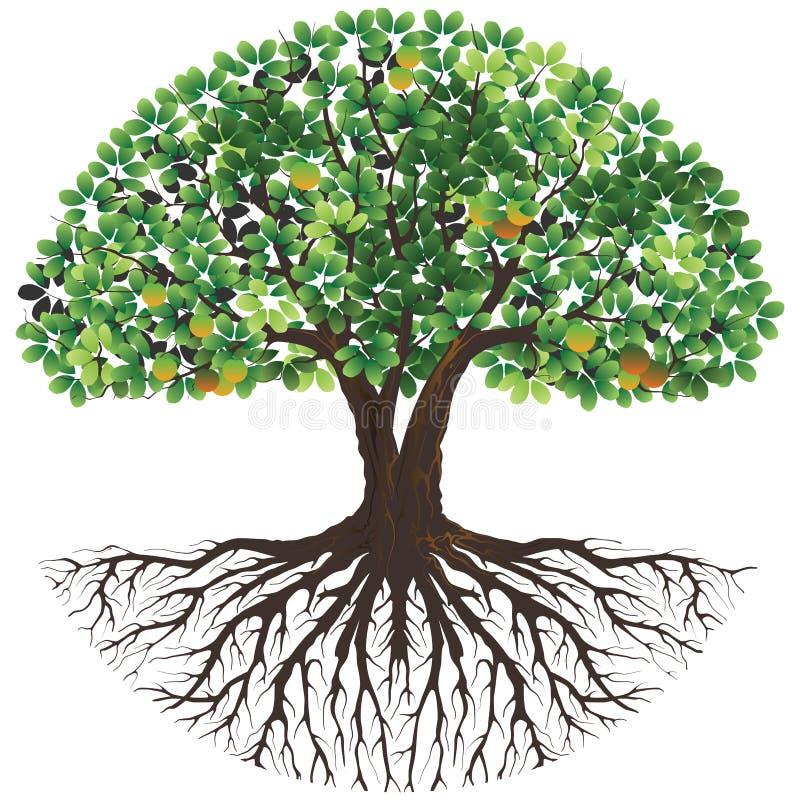 Oude boom van het levensembleem royalty-vrije illustratie