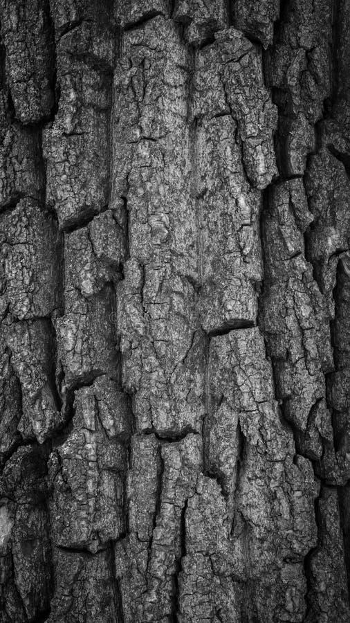 Oude boomboomstam als achtergrond voor kunstenaars stock foto's