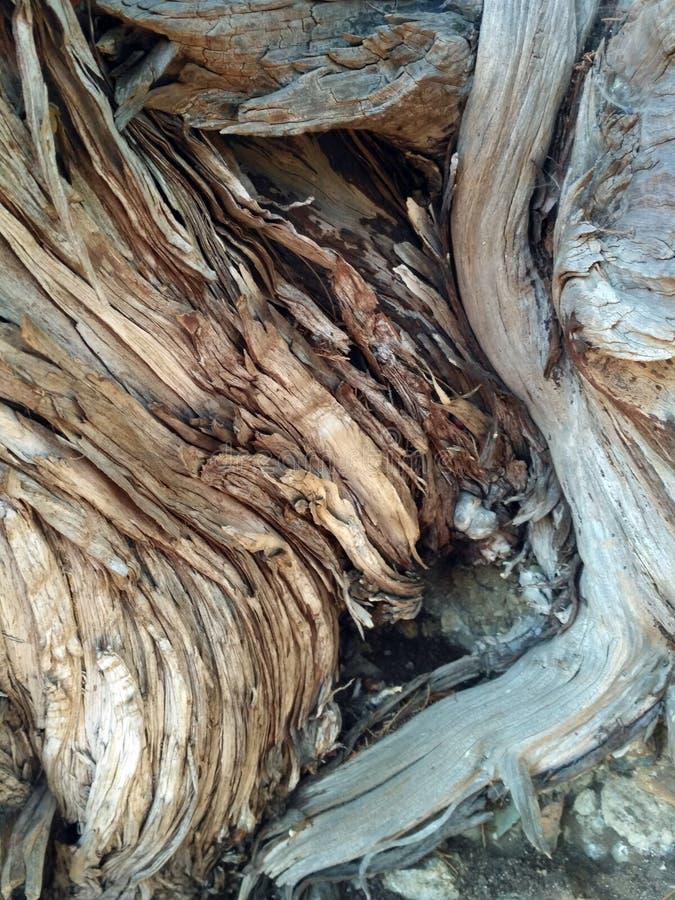 Oude boomschors met een patroon binnen in het bos royalty-vrije stock foto's