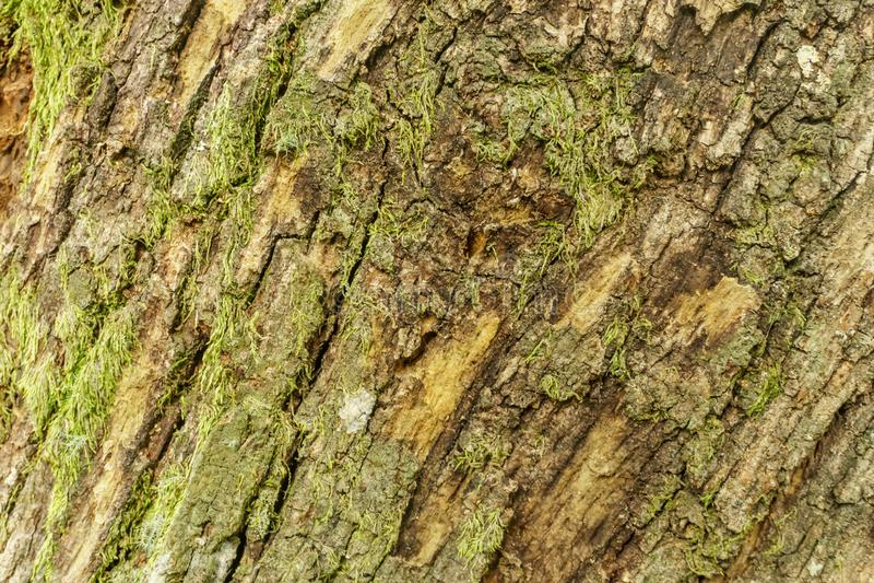 Oude boomstamtextuur, schorspatroon royalty-vrije stock foto's