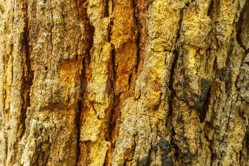 Oude boomstamtextuur, schorspatroon royalty-vrije stock fotografie
