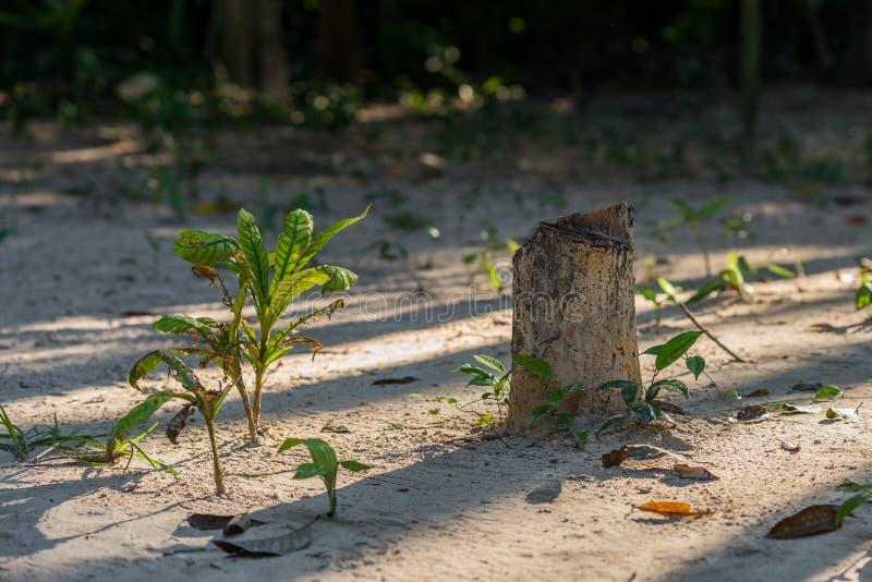 Oude boomstomp in de wildernis met klein stock foto