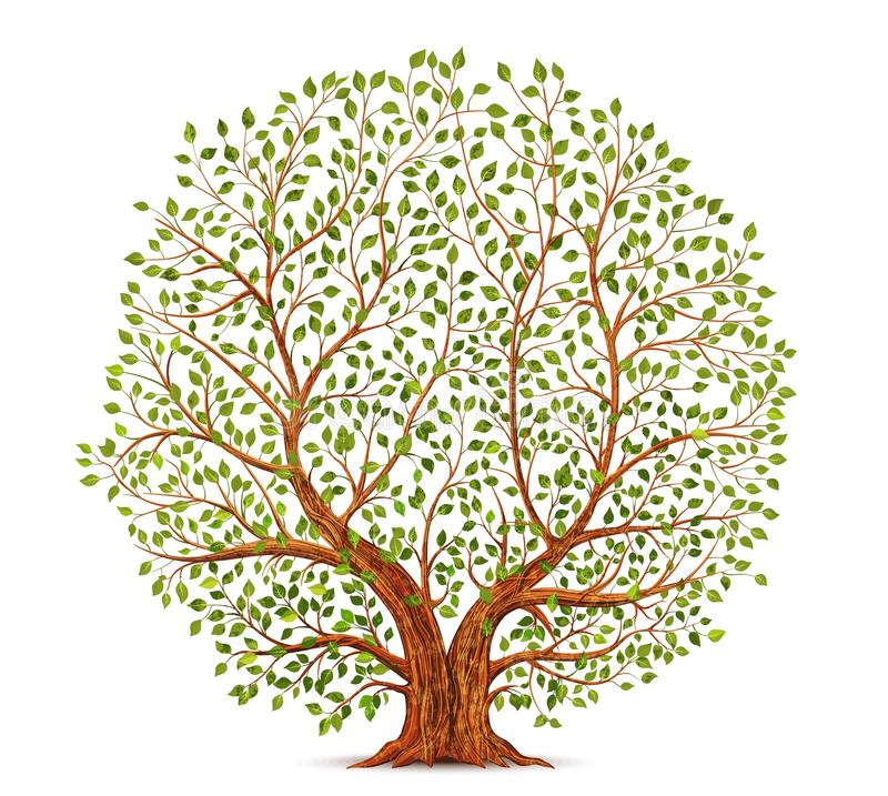 Oude boomvector stock illustratie