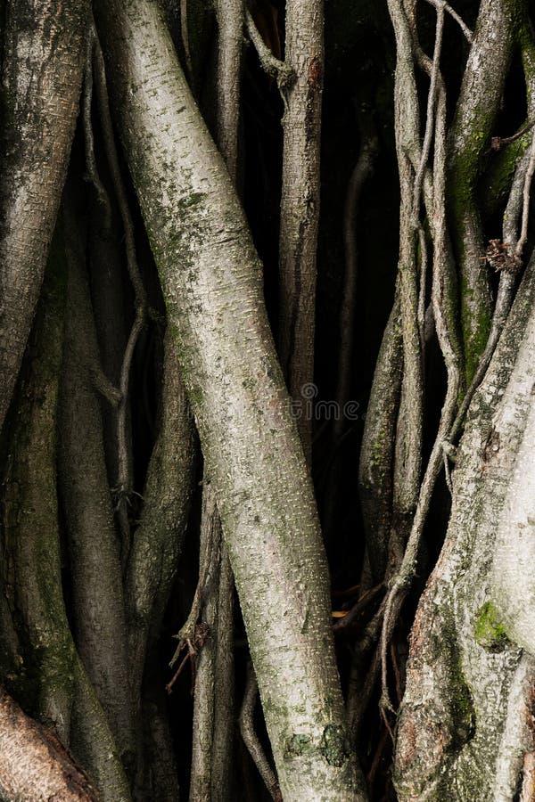 Oude boomwortels met donker eng de vreesgevoel van het schaduwen groen mos royalty-vrije stock afbeelding