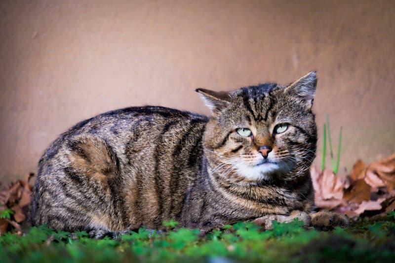 Oude bored kat in de herfst stock afbeeldingen