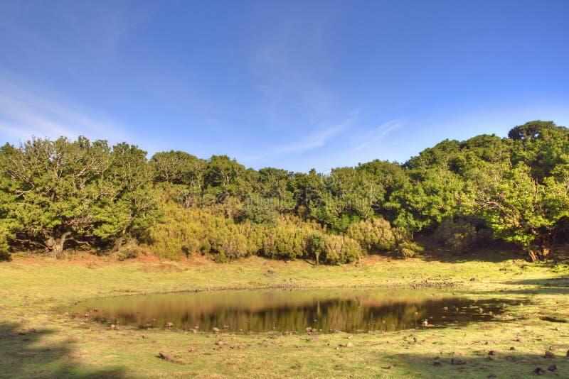 Oude Bos en Pool op Portugees Eilandplateau royalty-vrije stock afbeeldingen