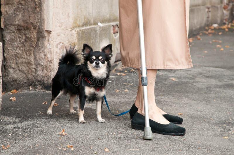 Oude dame met hond royalty-vrije stock foto's