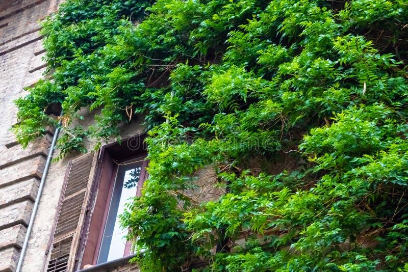 Oude die bakstenen muur en het venster met de wijnstok wordt behandeld royalty-vrije stock foto