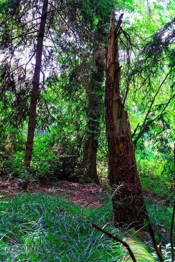 Oude die boom, met van de de kunst de griezelige fantasie van het mossprookje fijn kleuren openluchtbeeld wordt behandeld stock fotografie