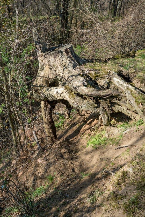 Oude die boomstomp met mos wordt behandeld royalty-vrije stock afbeelding