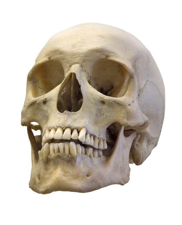 Oude die schedel op wit wordt geïsoleerd royalty-vrije stock afbeelding