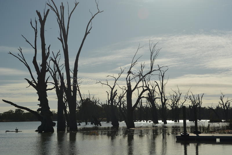 Oude dode bomen op het water stock afbeelding