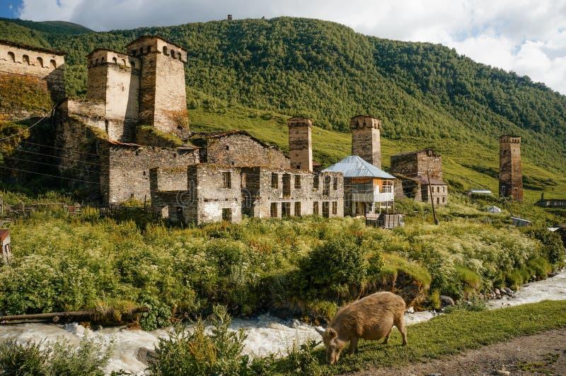 oude doorstane gebouwen tegen kleine rivierstroom tegen heuvels en weidende beer, Ushguli, royalty-vrije stock afbeelding