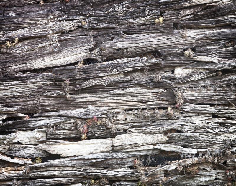 oude doorstane houten muur stock afbeeldingen