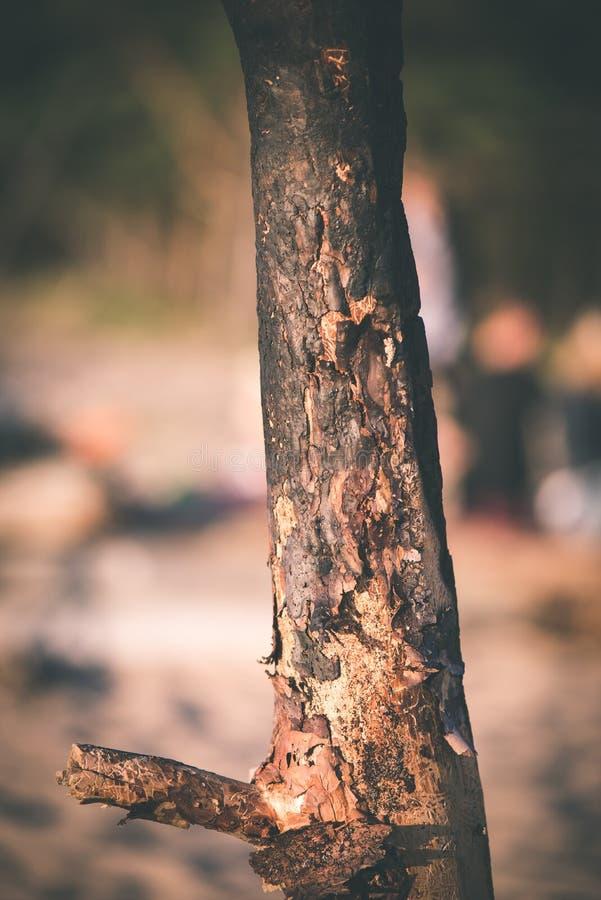oude droge gebrande houten planken - uitstekend filmeffect stock fotografie