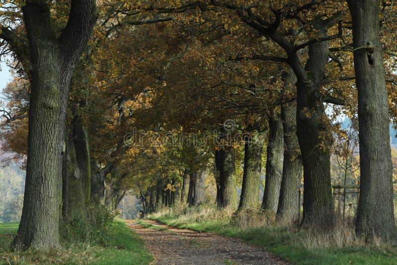 Oude Eiken van Reinhard Forest royalty-vrije stock foto's