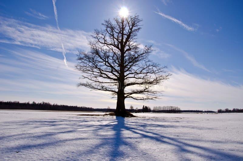 Oude en eenzame eiken boom op sneeuwgebied royalty-vrije stock afbeeldingen