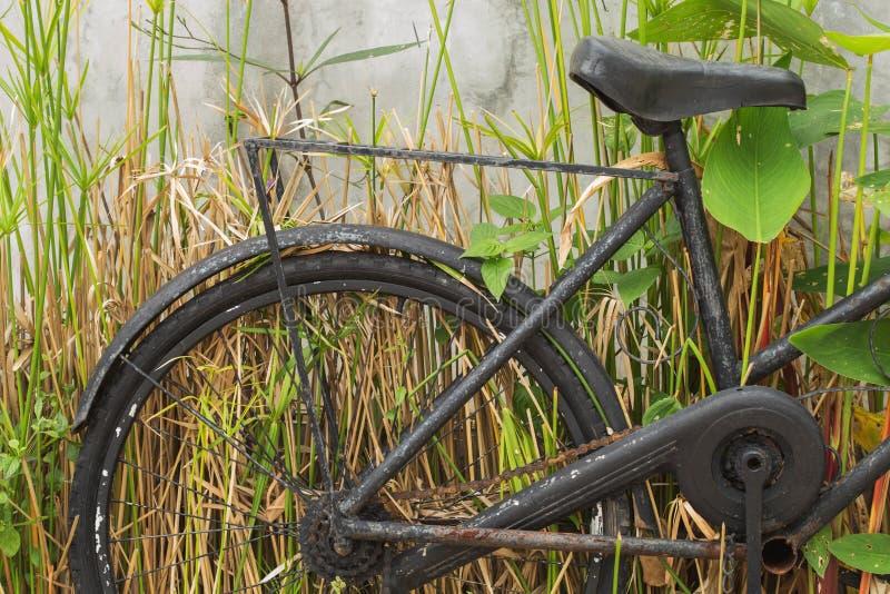Oude fietsen en installaties royalty-vrije stock foto's