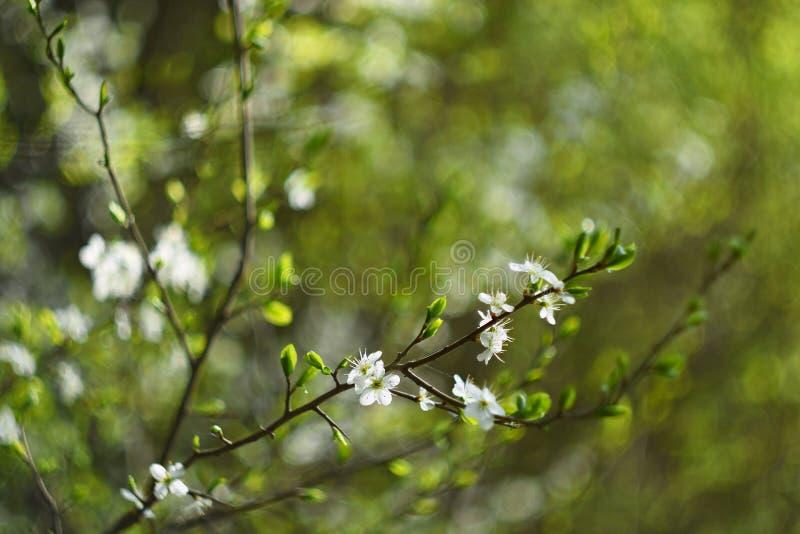 Oude fotolens met mooie achtergrond en ringen - bokeh De boom van de bloesem De achtergrond van de aard Zonnige dag enkel Geregen stock afbeelding