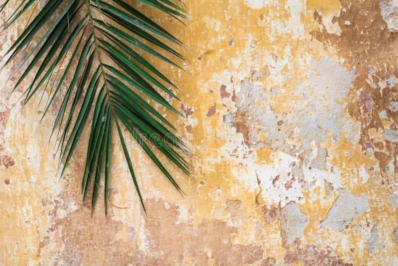 Oude gebarsten antieke uitstekende historische traditionele muur en palm t stock fotografie