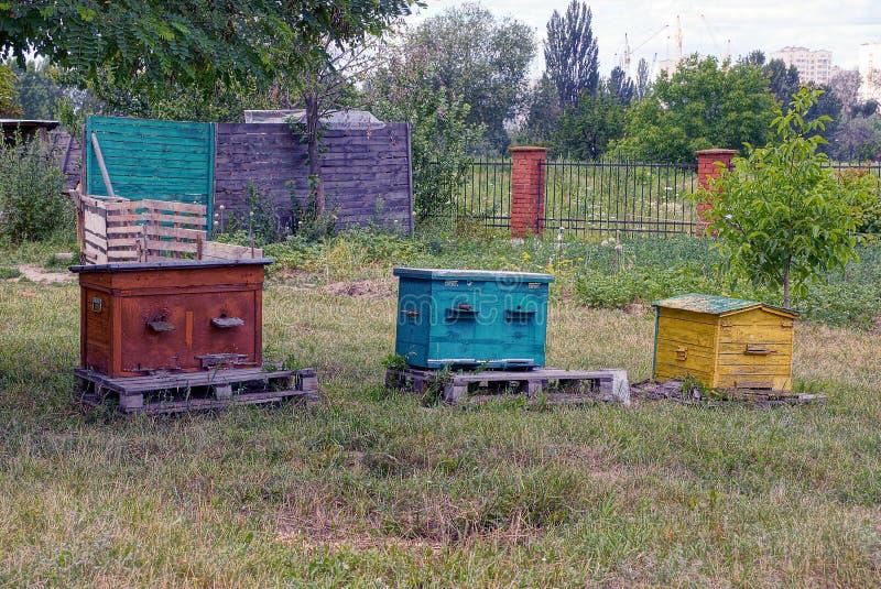 Oude gekleurde houten bijenkorven in het gras op een bijenstal stock fotografie