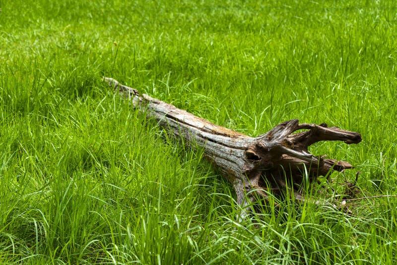 Oude Gevallen Boom en lang Gras stock afbeeldingen
