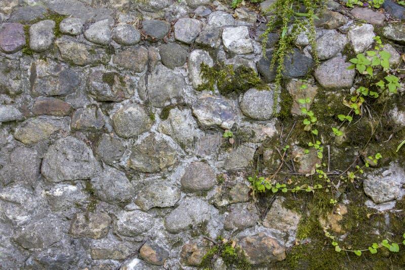 Oude grijze, blauwe muur van stenen van diverse vormen en grootte met groene mos en vegetatie natuurlijke oppervlaktetextuur stock foto's
