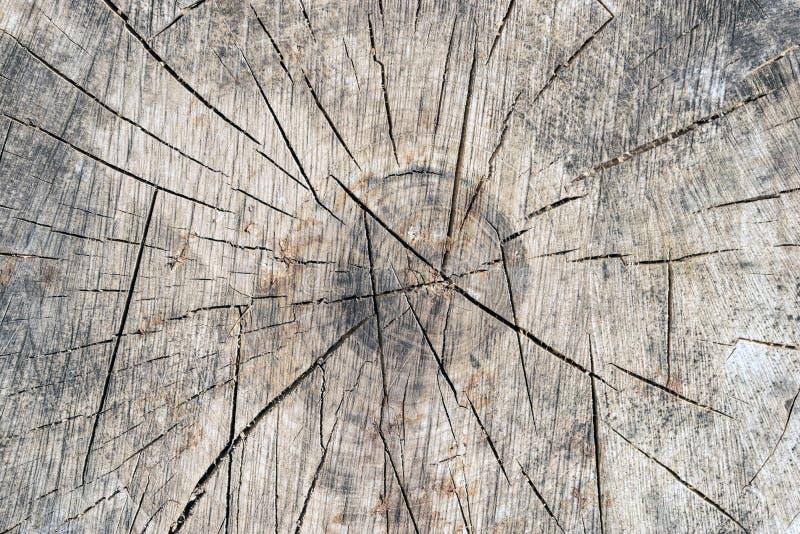 Oude grijze de textuurachtergrond van de boomstomp Houten uitstekende textuur van stock foto's