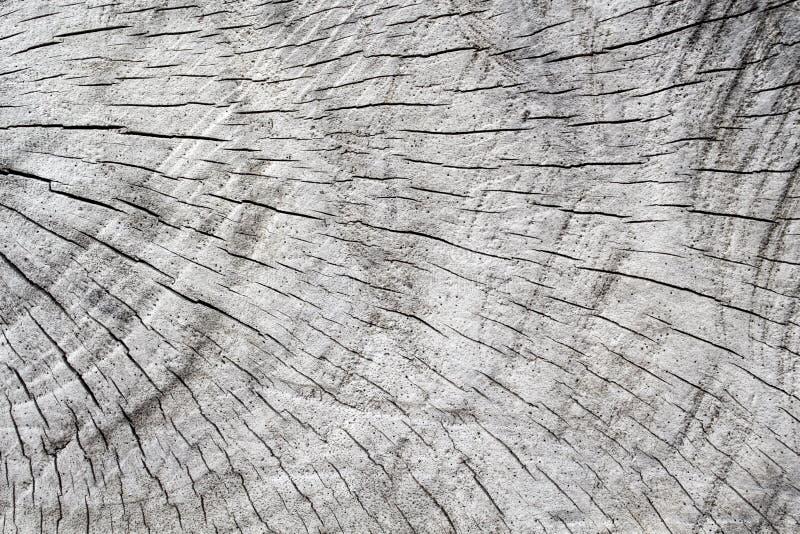 Oude grijze houten textuur De besnoeiing van boomcirkels Grijs hout met doorstane barstlijnen stock fotografie