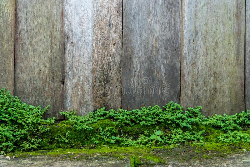 Oude grijze steenmuur met de groene achtergrond van de mostextuur stock afbeeldingen