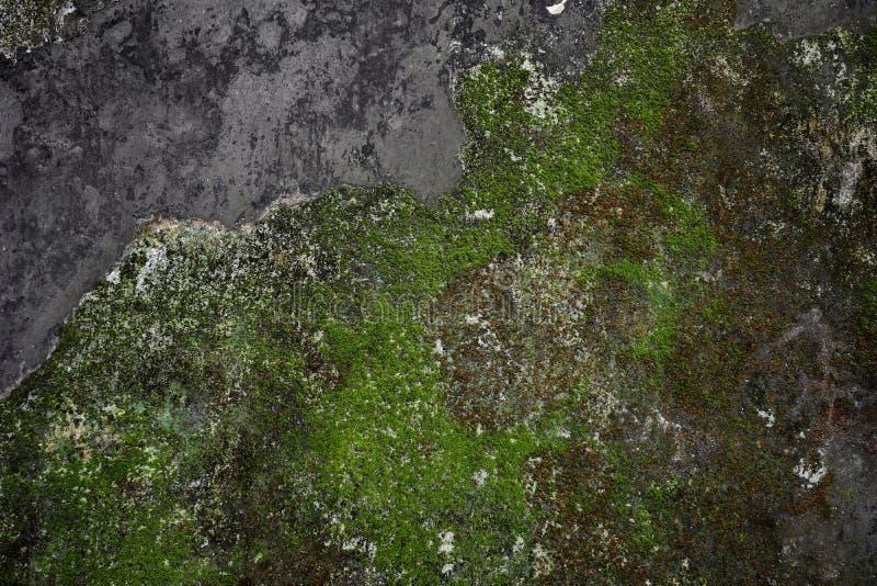 Oude grijze steenmuur met groen mos stock afbeeldingen