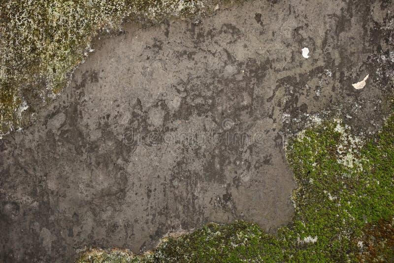 Oude grijze steenmuur met groen mos royalty-vrije stock foto's