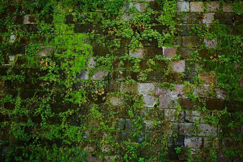 Oude grijze steenmuur met groene mostextuur stock foto's