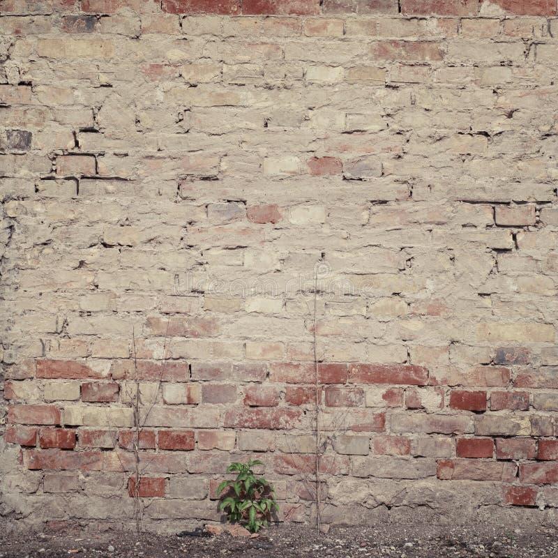 Oude grungebakstenen muur royalty-vrije stock foto's