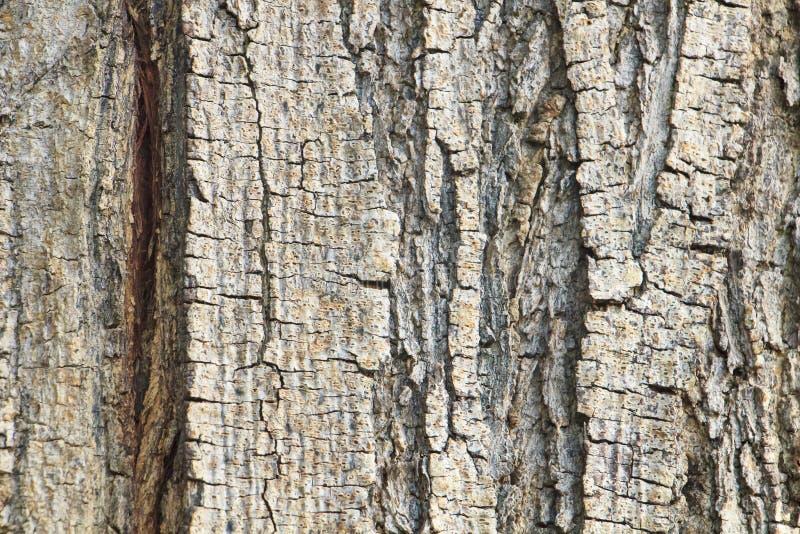 Oude het detailtextuur van de boomboomstam royalty-vrije stock afbeeldingen