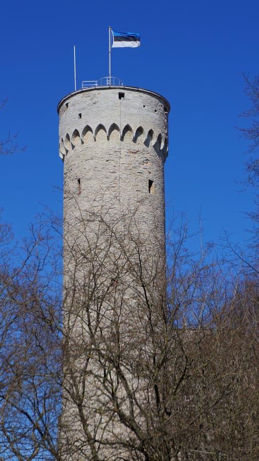 Oude historische massieve toren in Tallinn (Estland) met vlag royalty-vrije stock fotografie