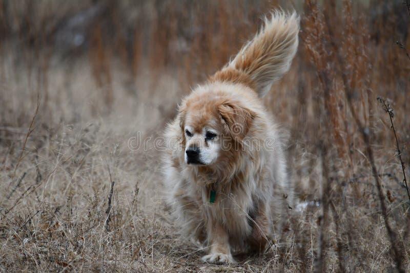Oude hond op een gang stock afbeeldingen