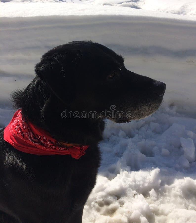 Oude hond op een zonnige de winterdag stock afbeeldingen
