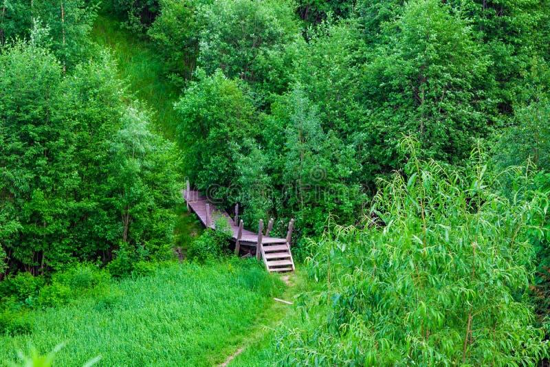 Oude houten brug in het bos onder de bomen en de struiken met groene bladeren, royalty-vrije stock foto's