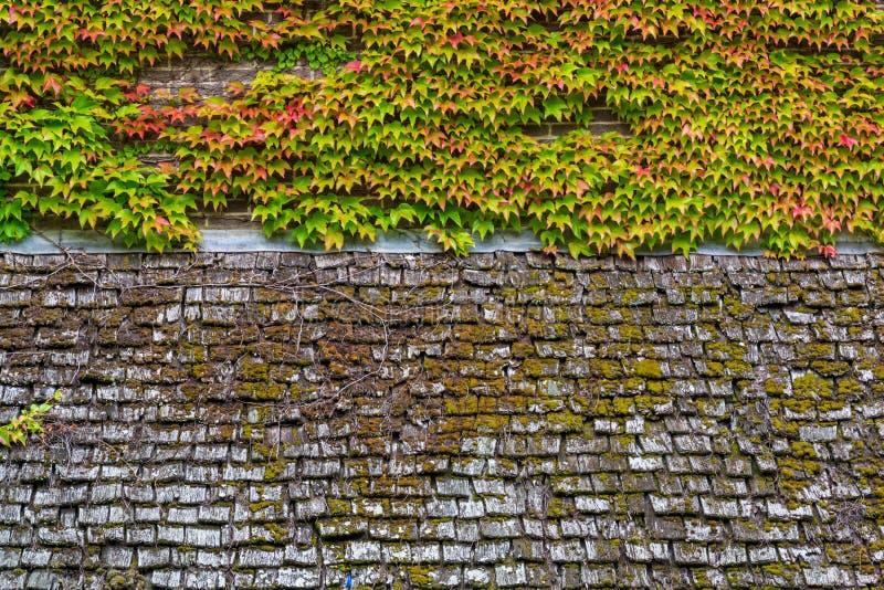 Oude houten dakoppervlakte met groen mos op het achtergrondtextuur royalty-vrije stock fotografie