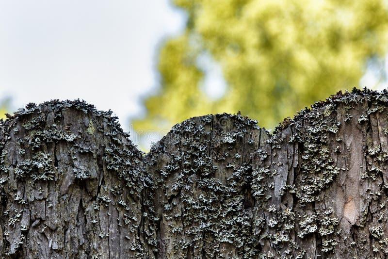 Oude houten die omheining met mos op achtergrond van groen gazon wordt overwoekerd stock fotografie