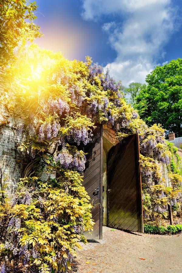 Oude houten poort in een stadspark met wisteriabloemen royalty-vrije stock foto