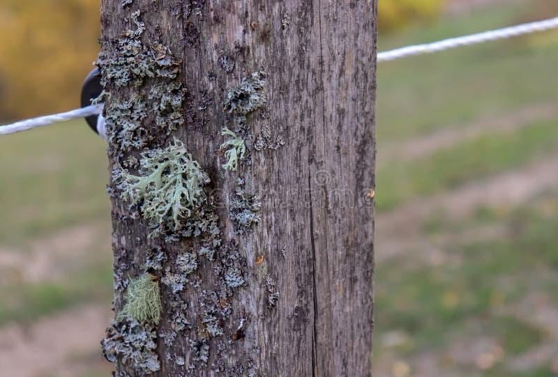 Oude houten rustieke omheiningspost met mos en draden stock afbeelding