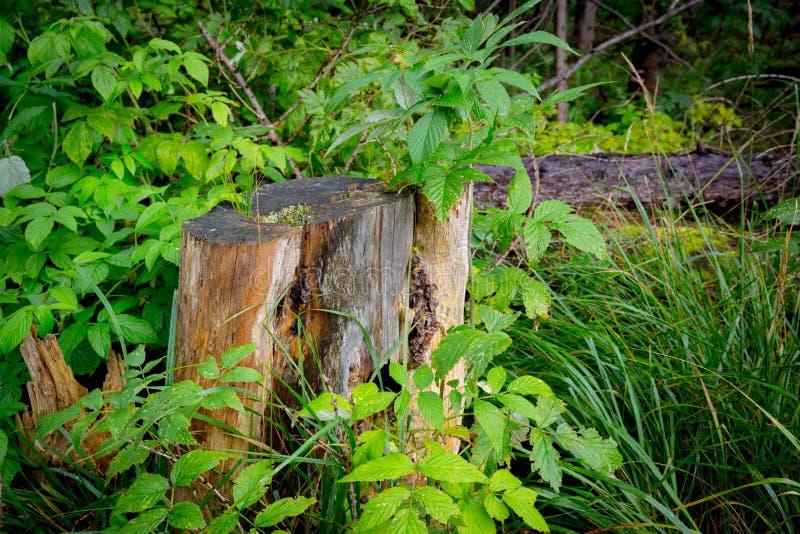 Oude houten stomp stock afbeelding