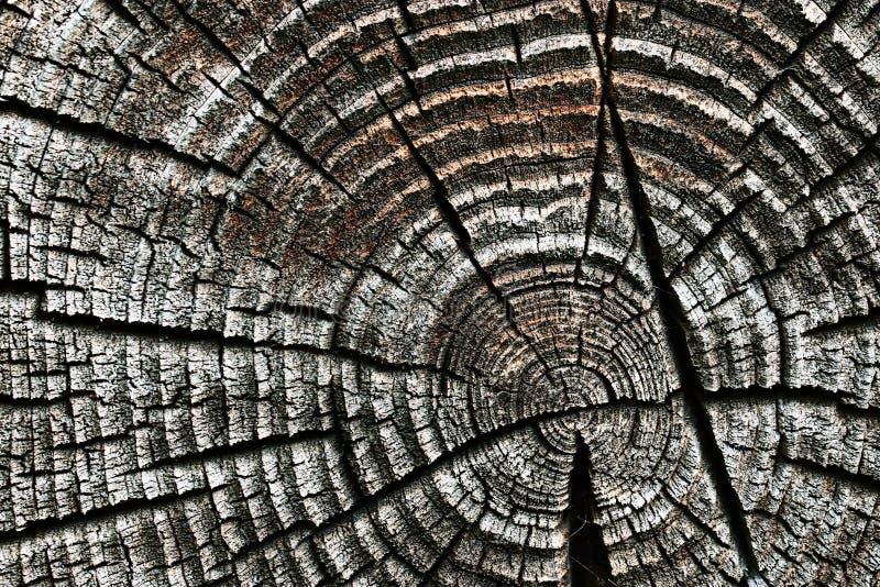 Oude houten textuurcirkel als achtergrond royalty-vrije stock afbeeldingen